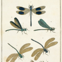 Libellulae, dragonflies, from Harris' Exposition of English insects