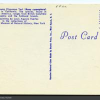 http://lbry-web-002.amnh.org/san/AMNH_postcards/100213323_13v.jpg