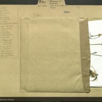 Folder of botanical specimen cards