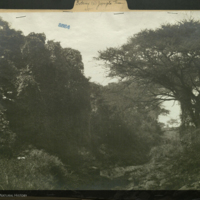 Landscape, Africa, photograph mounted to botany of Africa folder