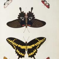 Butterflies and moths from Cramer's De uitlandsche kapellen, voorkomende in de drie waerld-deelen Asia, Africa en America