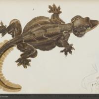 http://lbry-web-002.amnh.org/san/naturalhistories/b10464177_5.jpg