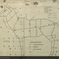 Zebra specimen measurement chart, for use in Water Hole Group, Akeley Hall of African Mammals