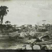 Landscape with giraffe, photograph for use in Water Hole Group, Akeley Hall of African Mammals