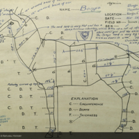 Bongo, Thiririka River, specimen measurement chart for Bongo Group, Akeley Hall of African Mammals