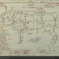 Lion, specimen measurement chart for use in Lion Group, Akeley Hall of African Mammals