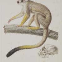 http://lbry-web-002.amnh.org/san/naturalhistories/b10495770_5.jpg