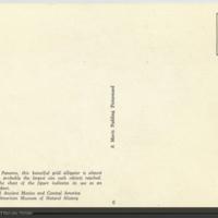 http://lbry-web-002.amnh.org/san/AMNH_postcards/100213323_41v.jpg