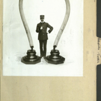 Tusks and standing man, showing scale, photograph mounted to Proboscidae folder