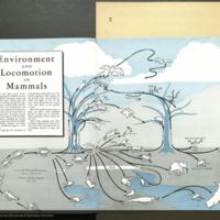 Environment and Locomotion in Mammals, Natural History magazine, May, 1943