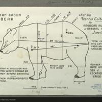 Alaska brown bear, specimen measurement chart for use in Alaska Brown Bear Group, Hall of North American Mammals