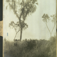 Down tree, photograph mounted to botany of Africa folder