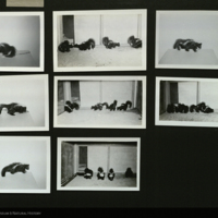 Skunks, photographs for use in Spotted Skunk and Cacomistle Group, Hall of North American Mammals