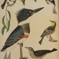 http://lbry-web-002.amnh.org/san/naturalhistories/b10203680_3.jpg