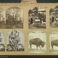 Stereopticons showing taxidermy: owls, monkeys playing cards, mammals, and bison, collection of Mrs. Maxwell, 1876