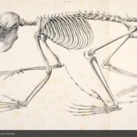http://lbry-web-002.amnh.org/san/naturalhistories/b12045160_3.jpg