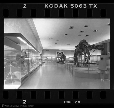 http://lbry-web-002.amnh.org/san/to_upload/35mm_halls_new/600806_02a.jpg