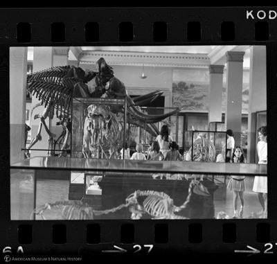 http://lbry-web-002.amnh.org/san/to_upload/35mm_halls_new/61958_27.jpg