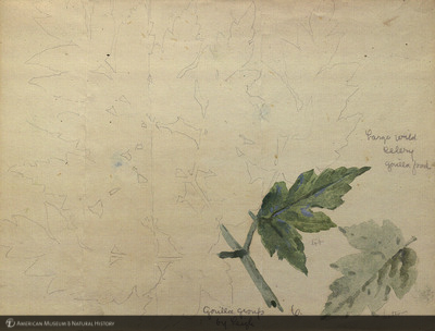 http://lbry-web-002.amnh.org/san/mo_exhibition/art002_b1_18.jpg