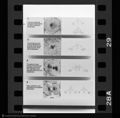 http://lbry-web-002.amnh.org/san/to_upload/35mm_halls_new/65878_29.jpg