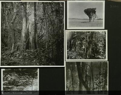 http://lbry-web-002.amnh.org/san/mo_exhibition/ppc_533_b12_f253_001.jpg