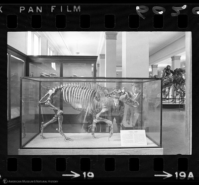 http://lbry-web-002.amnh.org/san/to_upload/35mm_halls_new/602016_19.jpg