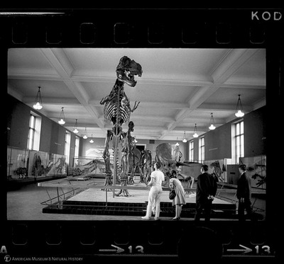 http://lbry-web-002.amnh.org/san/to_upload/35mm_halls_new/602864_13.jpg