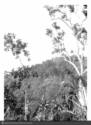 http://lbry-web-002.amnh.org/san/to_upload/Beck-PapuaNewGuinea/NG-5x7-prints/115632.jpg