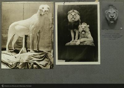 http://lbry-web-002.amnh.org/san/mo_exhibition/ppc_533_b02_f053_005.jpg