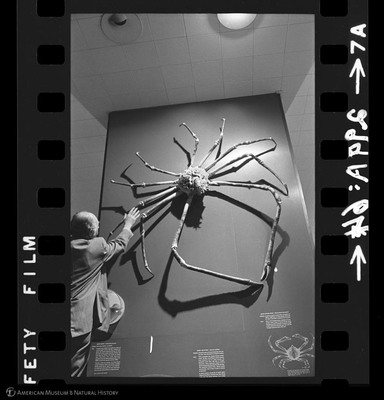http://lbry-web-002.amnh.org/san/to_upload/35mm_halls_new/64191_07.jpg