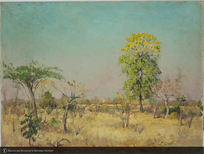 http://lbry-web-002.amnh.org/san/palais-de-tokyo-loan-paintings/100101663.jpg
