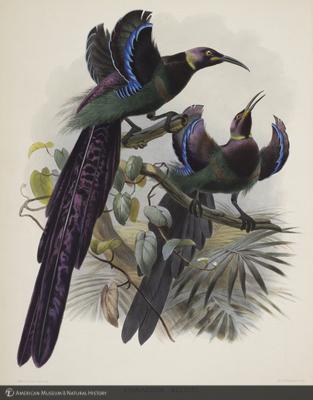 http://lbry-web-002.amnh.org/san/naturalhistories/b10610169_2.jpg