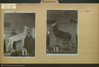 http://lbry-web-002.amnh.org/san/mo_exhibition/ppc_532_b06_f100_033.jpg