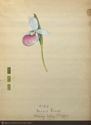 http://lbry-web-002.amnh.org/san/mo_exhibition/art003_b1_06.jpg