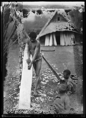 http://lbry-web-002.amnh.org/san/to_upload/Beck-PapuaNewGuinea/NG-5x7-negs/115563.jpg