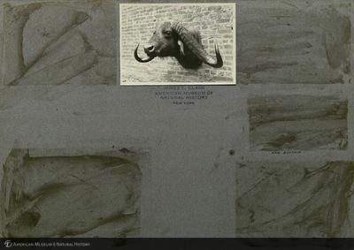 http://lbry-web-002.amnh.org/san/mo_exhibition/ppc_533_b01_f011_006.jpg