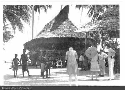 http://lbry-web-002.amnh.org/san/to_upload/Beck-PapuaNewGuinea/NG-5x7-prints/115764.jpg