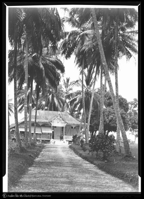http://lbry-web-002.amnh.org/san/to_upload/Beck-PapuaNewGuinea/NG-5x7-negs/115682.jpg