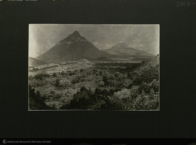 http://lbry-web-002.amnh.org/san/mo_exhibition/ppc_533_b11_f238_006.jpg