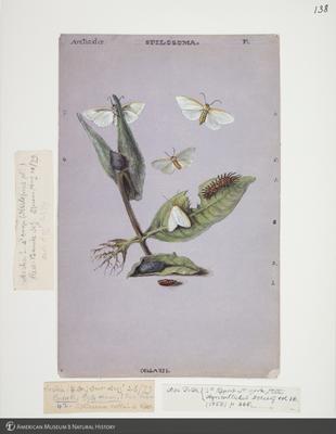 http://lbry-web-002.amnh.org/san/to_upload/titianbutterflies/b1083009_141.jpg