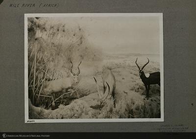 http://lbry-web-002.amnh.org/san/mo_exhibition/ppc_533_b12_f254_002.jpg