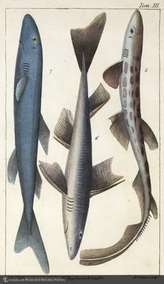 http://lbry-web-002.amnh.org/san/naturalhistories/b10468055_1.jpg