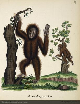 http://lbry-web-002.amnh.org/san/naturalhistories/b10764136_6.jpg