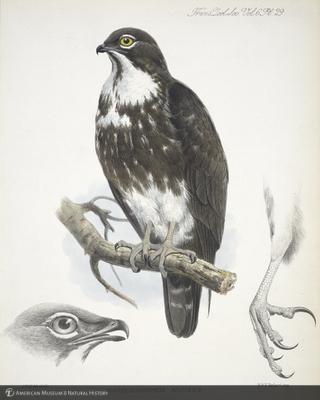 http://lbry-web-002.amnh.org/san/naturalhistories/b11267173_1.jpg