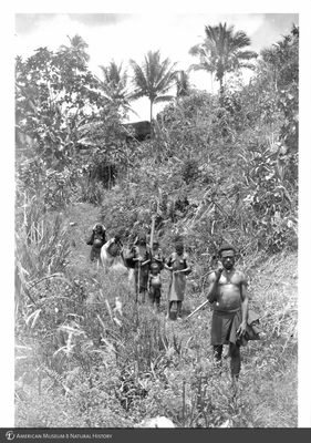 http://lbry-web-002.amnh.org/san/to_upload/Beck-PapuaNewGuinea/NG-5x7-prints/115623.jpg