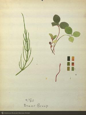 http://lbry-web-002.amnh.org/san/mo_exhibition/art003_b1_11.jpg