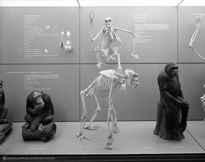 http://images.library.amnh.org/d/t/8x10/0002/00330756_l.jpg