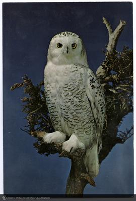 http://lbry-web-002.amnh.org/san/AMNH_postcards/100213323_32.jpg