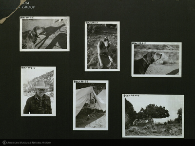 http://lbry-web-002.amnh.org/san/mo_exhibition/ppc_533_b13_f280_001.jpg