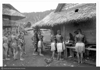 http://lbry-web-002.amnh.org/san/to_upload/Beck-PapuaNewGuinea/NG-5x7-prints/115752.jpg